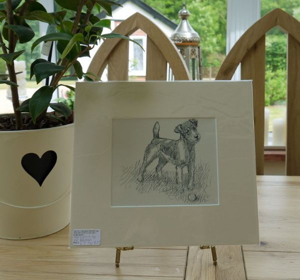 Wire haired Terrier with ball 1930's print by K F Barker - Ter B23